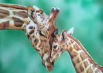Mother and Baby Giraffe wildlife art