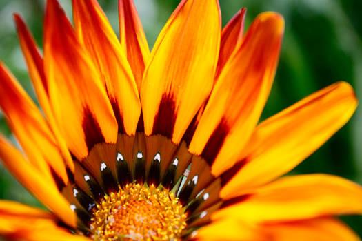 Bright Wet Flower