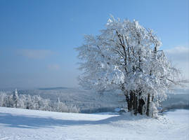 Winter. by JazzyJess
