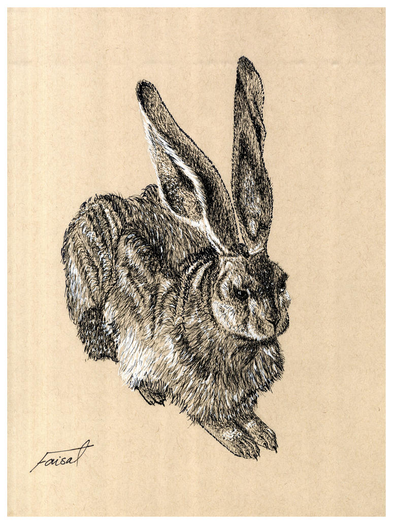 Hare by fizz1173
