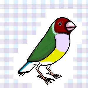 Birdiez0rz by LOLWTFBBQ