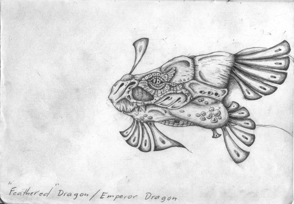 Emperor dragon by Reinhard-Gutzat