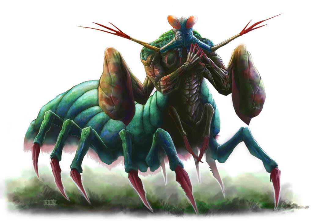 Mantis shrimp attack human