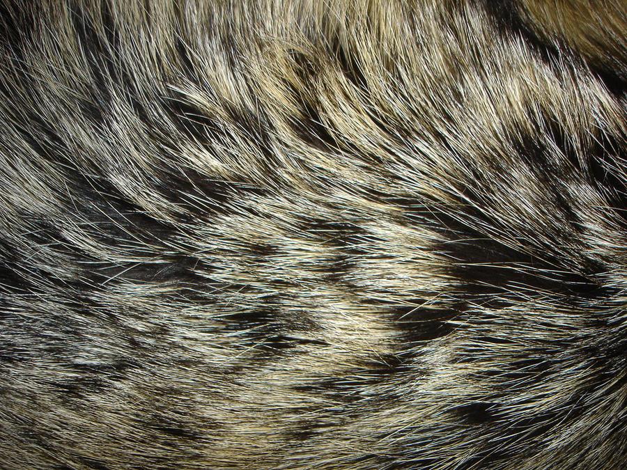 Fur Texture 1 By Fox N Wolf On Deviantart