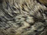 Fur Texture 1