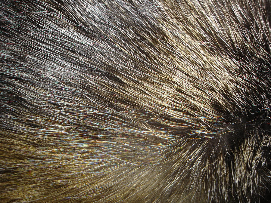 Fur Images - Reverse Search