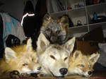 Fur Pile 2