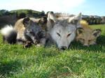 Fur Pile 4