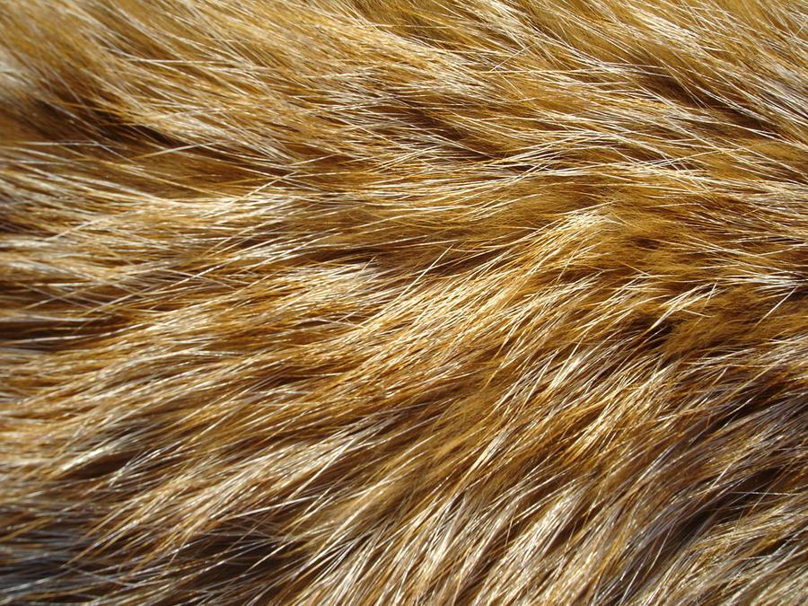 Fur Texture 6 by Fox-N-Wolf