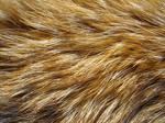 Fur Texture 6