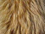 Fur Texture 9