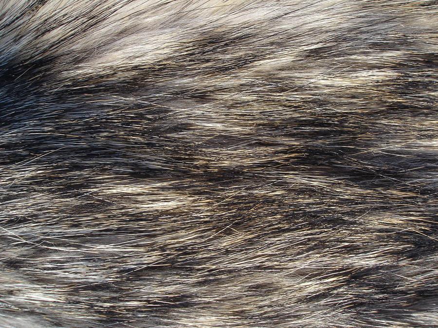 Seamless Wolf Fur Texture