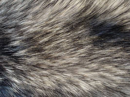 Fur Texture 16 by Fox-N-Wolf