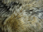 Fur Texture 17