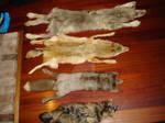 Fur Line-up