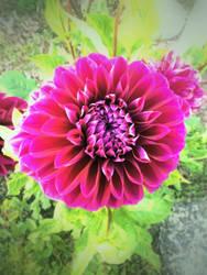 Flower at Church