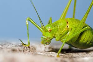 Green buggy macro by danielvijoi