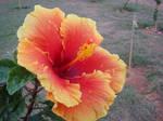 Stock - Flower 03