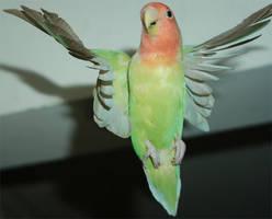 Wave to birdie by FennecFoxen