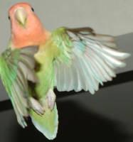 Dancing Birdie by FennecFoxen