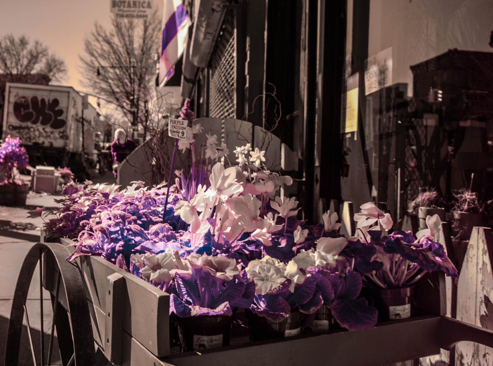 Purple Passion by FennecFoxen