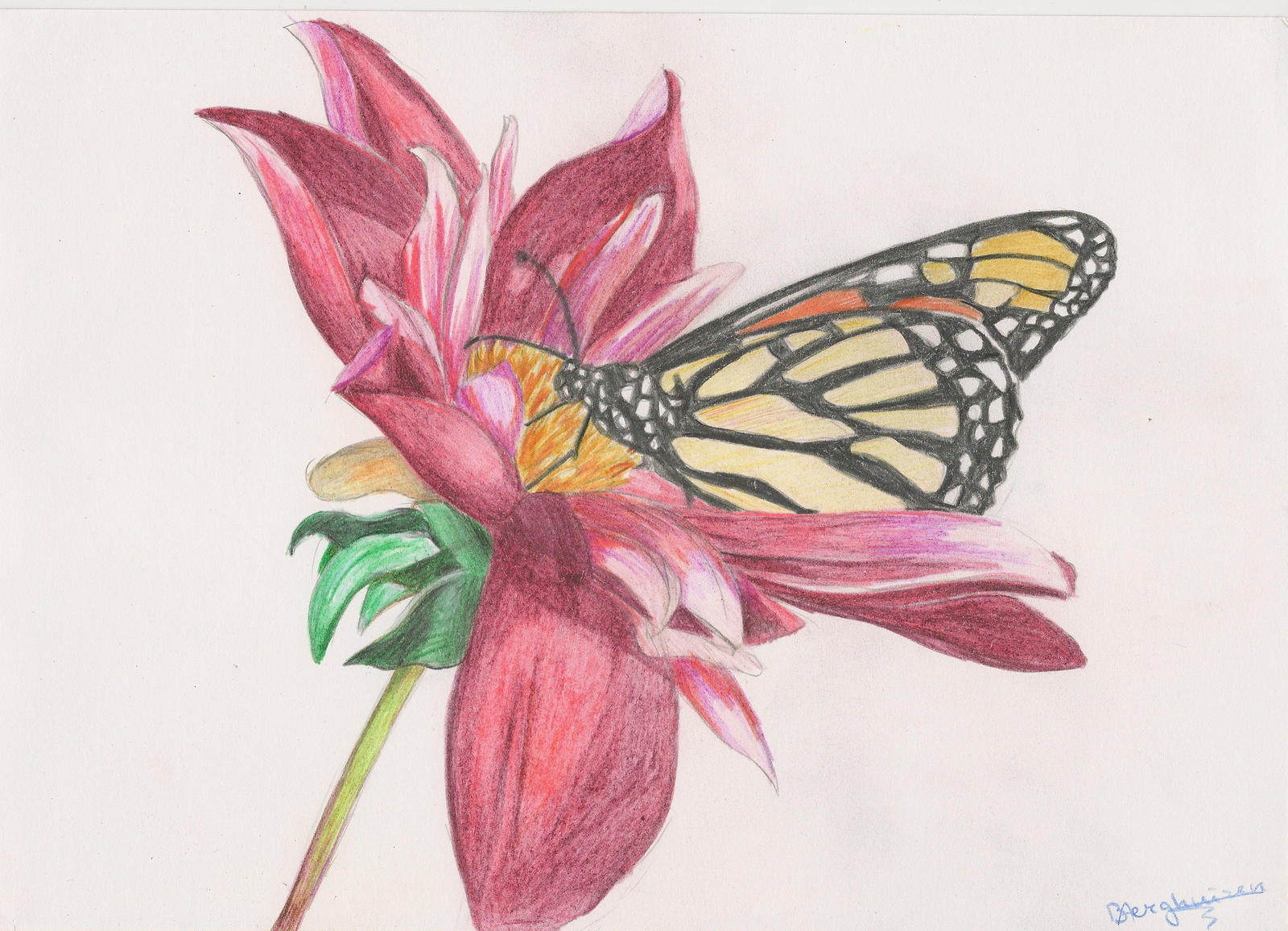 Butterfly on flower by Ashly-Me on DeviantArt