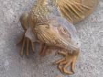 Evil Iguana
