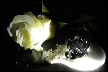 White and Black Rose (angle 3) by danielbastion