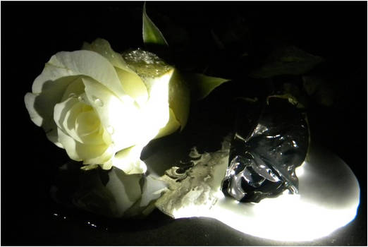 White and Black Rose (angle 3)