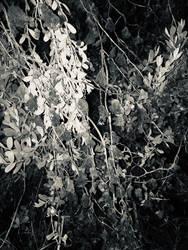 Sea Of Leaves II