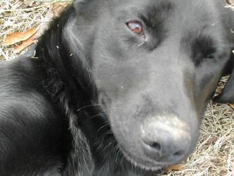 Dog1 by AkemiKenshin