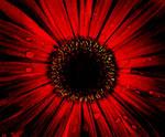 'Crimson' by Sunshinylisee