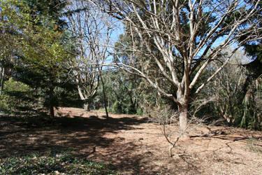 Woods by Aragwen-stock