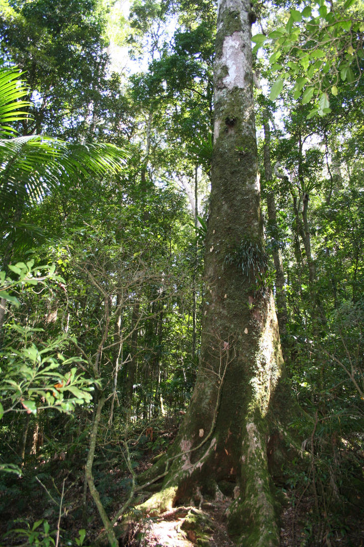 Tree Stock by Aragwen-stock