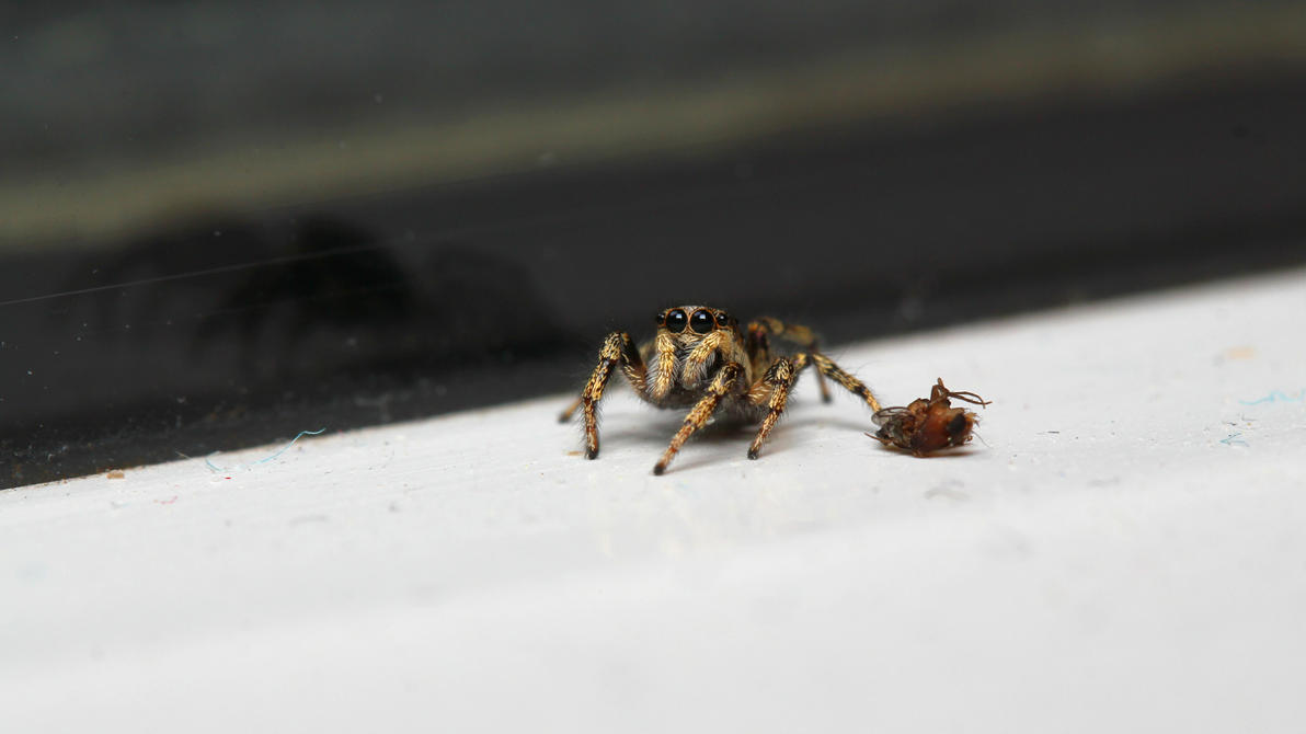 Spider XII by vvneagleone
