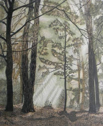 Forest Pen and Ink