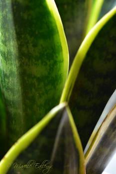Plant Macro Challenge 2020 - day 25