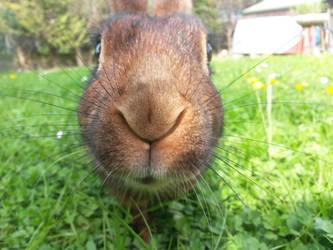 Rabbit by Venditore-Stan