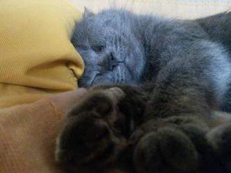 Cat by Venditore-Stan
