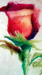 Rose - Still Life by 0bstint