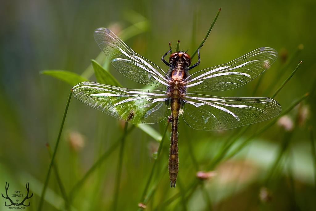 Crystal Wings by BugulNoz