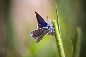 Butterfly by BugulNoz