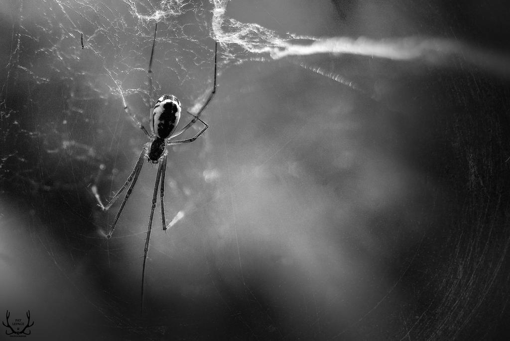 Broken Web (BW) by BugulNoz
