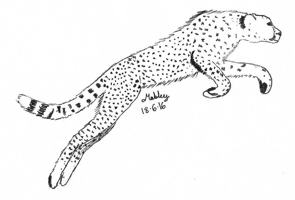 Cheetah by Mabley11