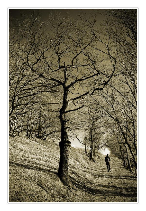 Walk by sanyo16