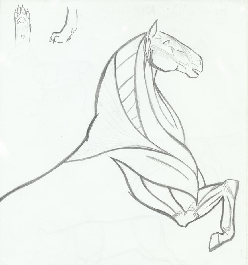 Anatomy sketchs - Horse and Dog paw sketch by MiyukiLovett on DeviantArt