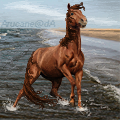 horse on a beach avvie by Arucane