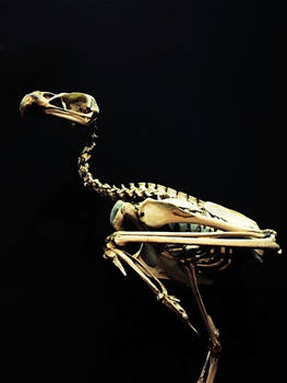 Stock - Skeleton bird