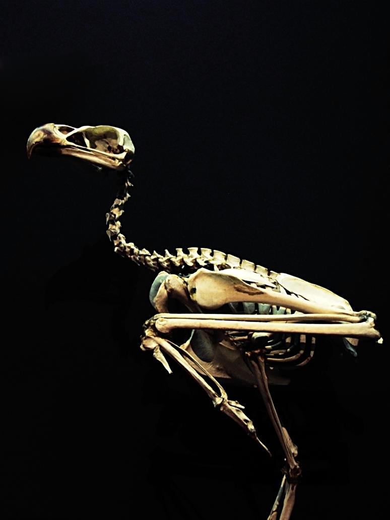 Stock skeleton bird by mustesielu