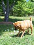 Curious Dog3